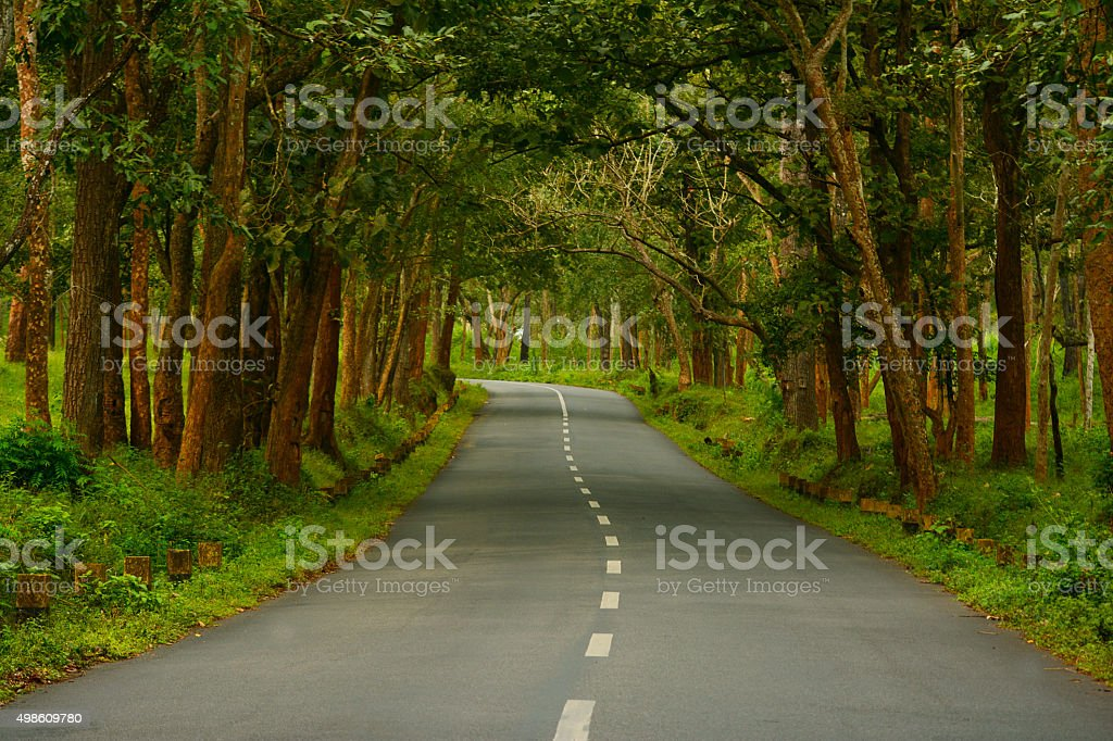 Country highway through the forest stock photo