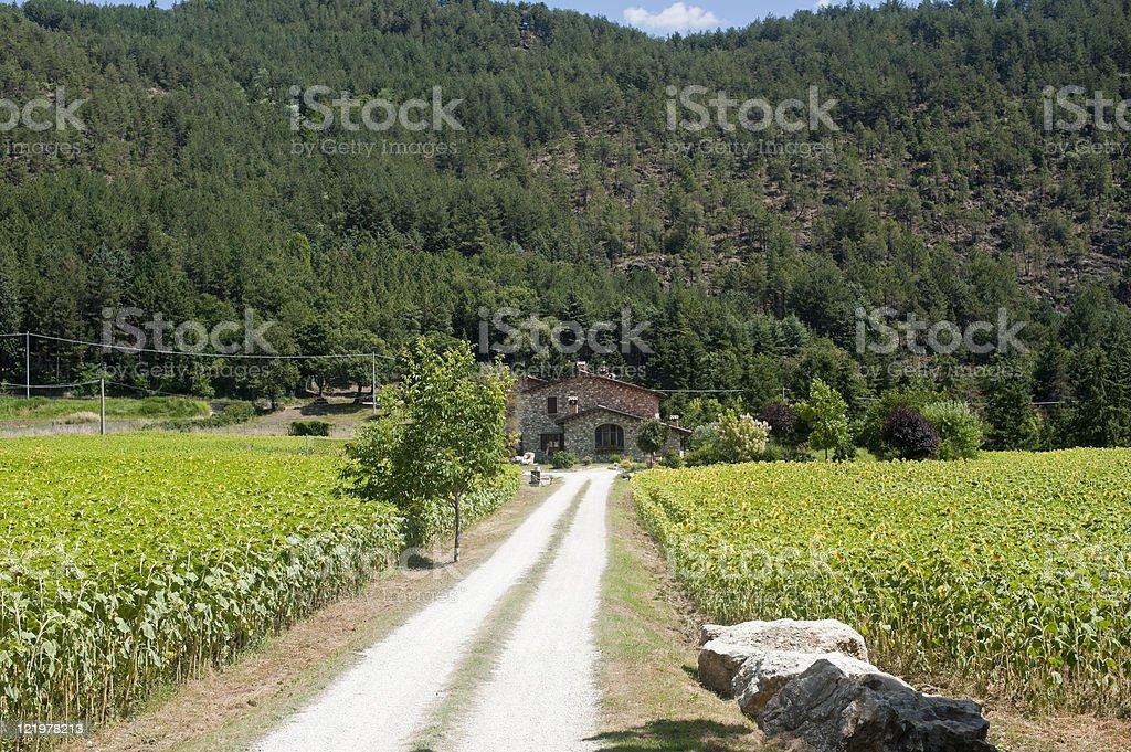 Country house near Arezzo (Tuscany, Italy) at summer royalty-free stock photo