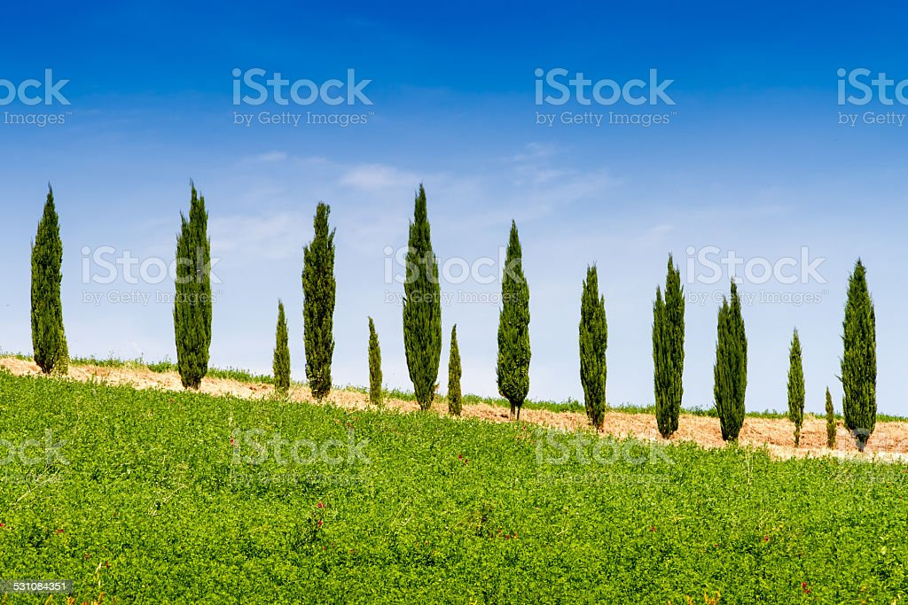 Country house with cypress in Tuscany, Italy stock photo