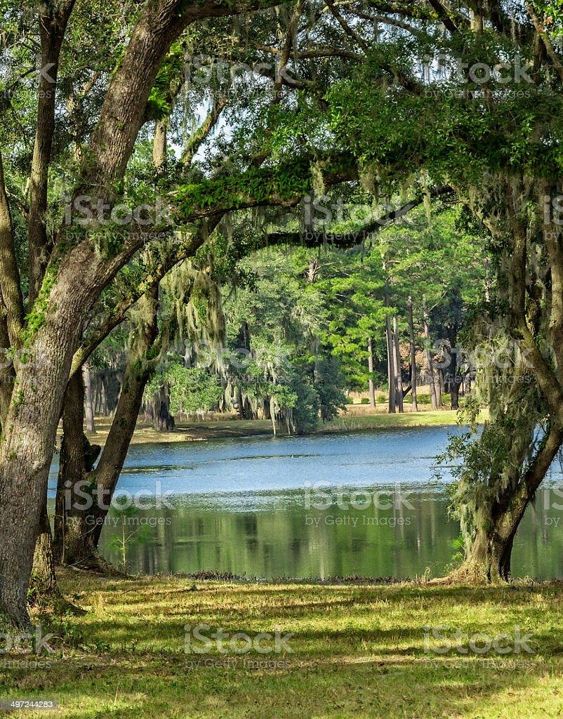 Country Lake stock photo