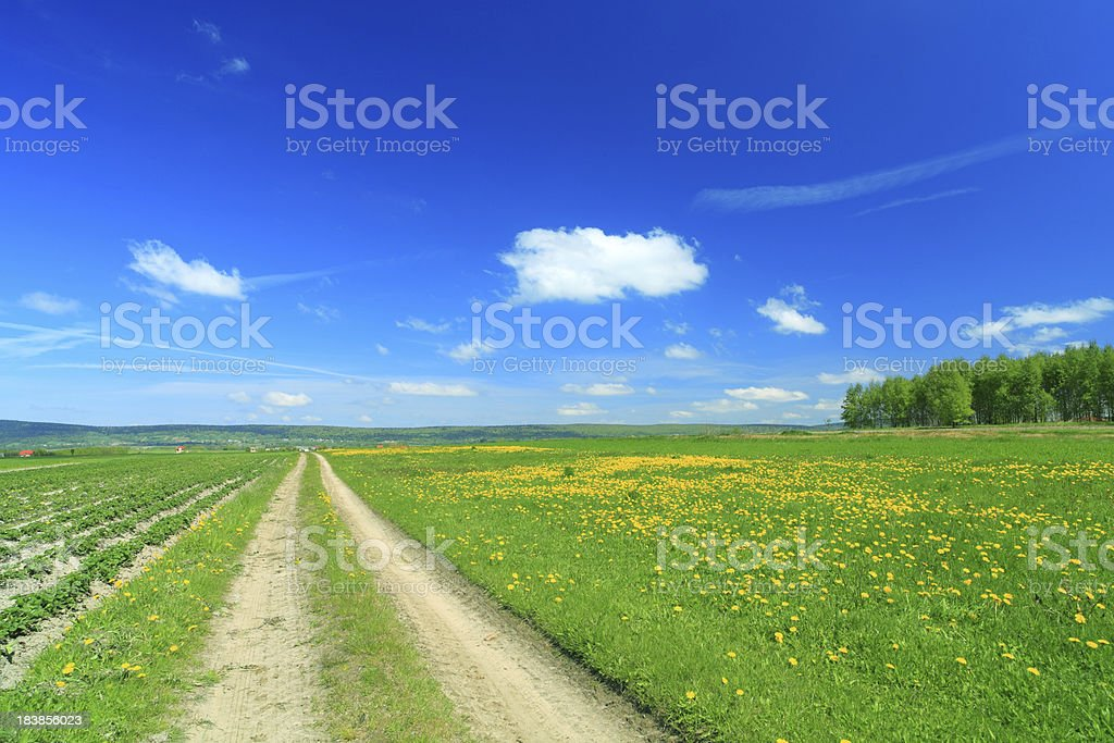 Country landscape - dandelion meadow, road and green grass royalty-free stock photo