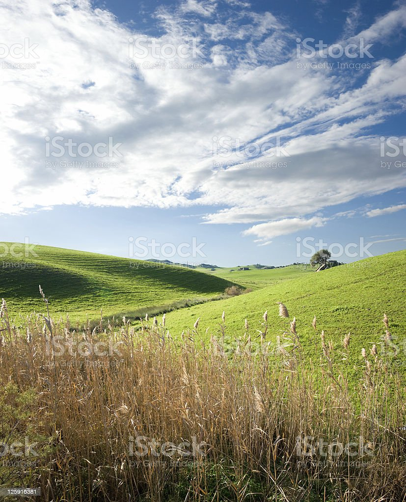 country landscape with stalks of reed bloom royalty-free stock photo