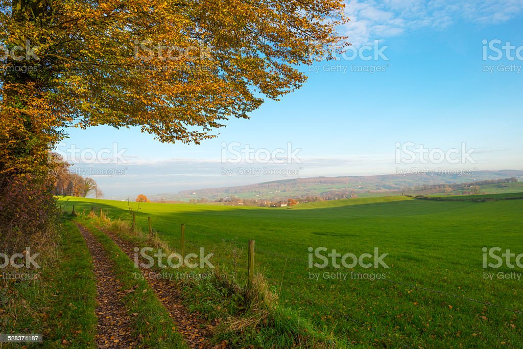 Country lane along meadow and forest at fall stock photo