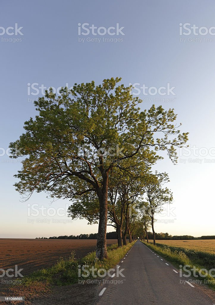 Country lane and trees stock photo