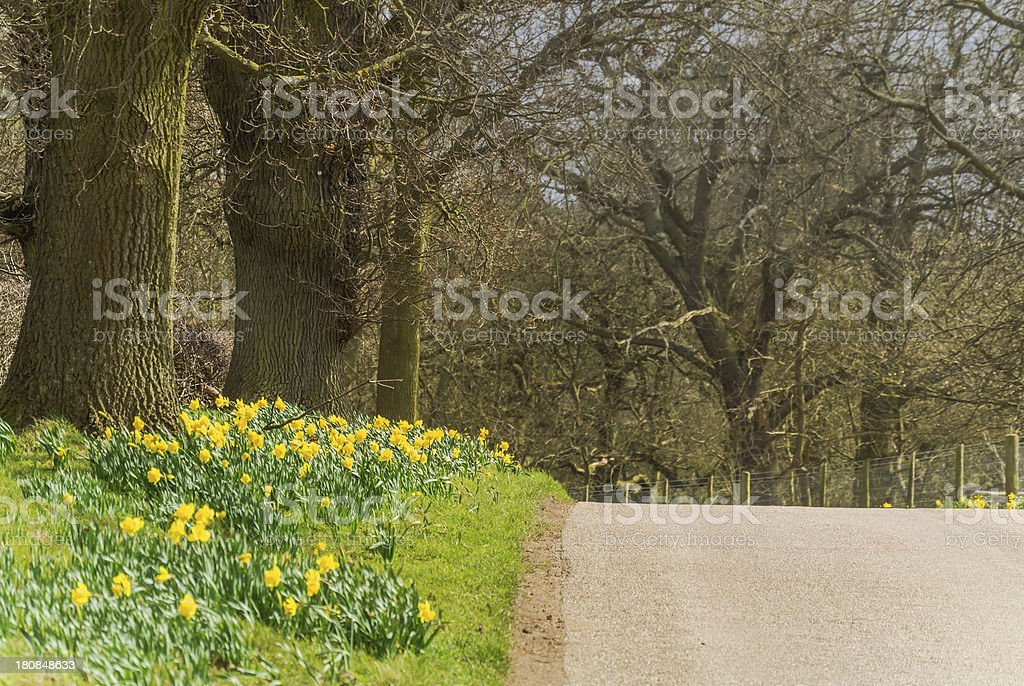 country lane stock photo