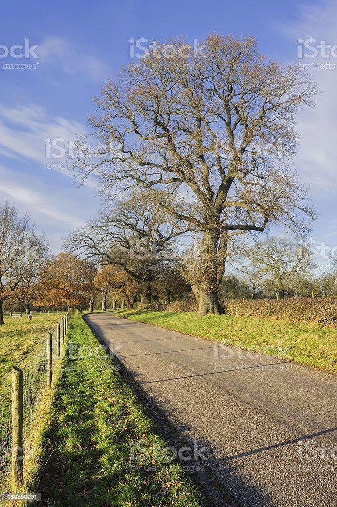 country lane royalty-free stock photo