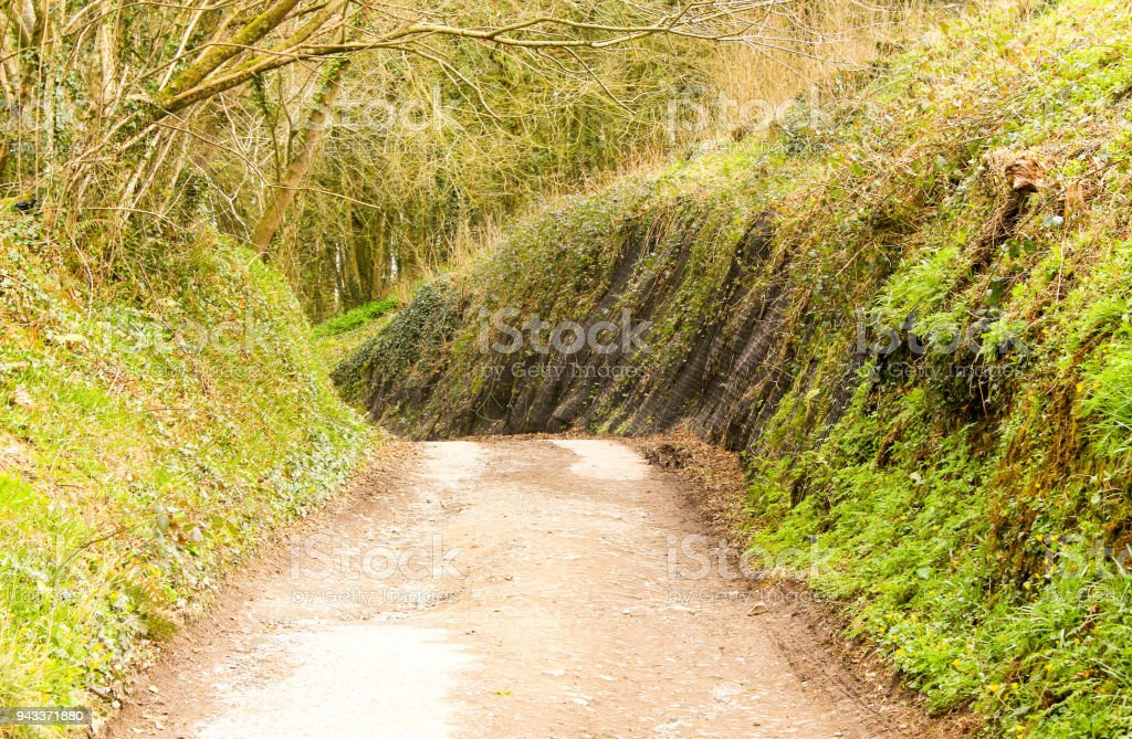 Country Lane with Foilage on either side stock photo