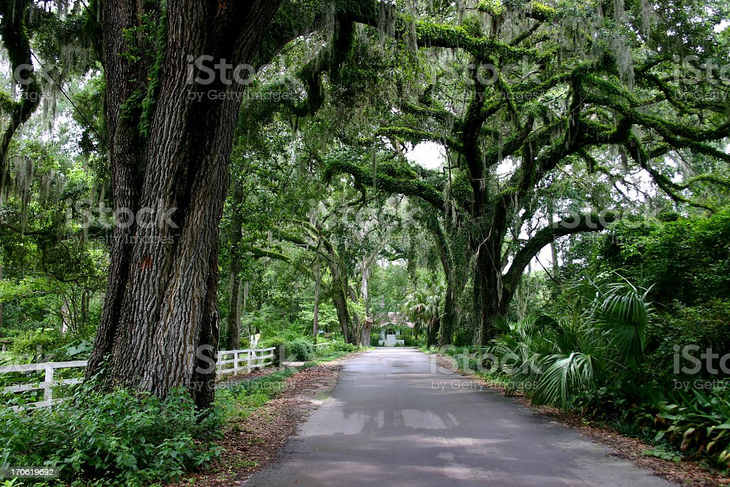 Country Lane with Oak Trees royalty-free stock photo