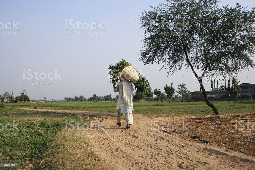 Country life royalty-free stock photo