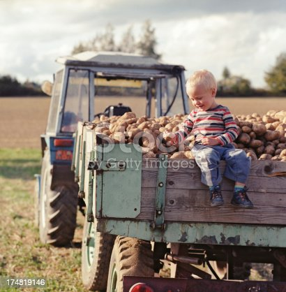 Potatoes harvest. Cheerful little boy sitting on a trailer full of potatoes.