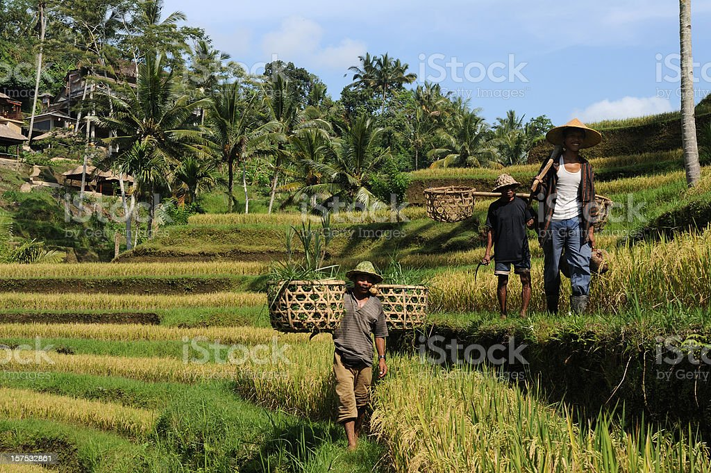 Country men on rice terraces at Bali stock photo