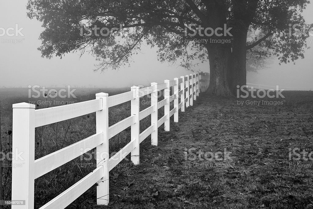 Country Morning Fog stock photo