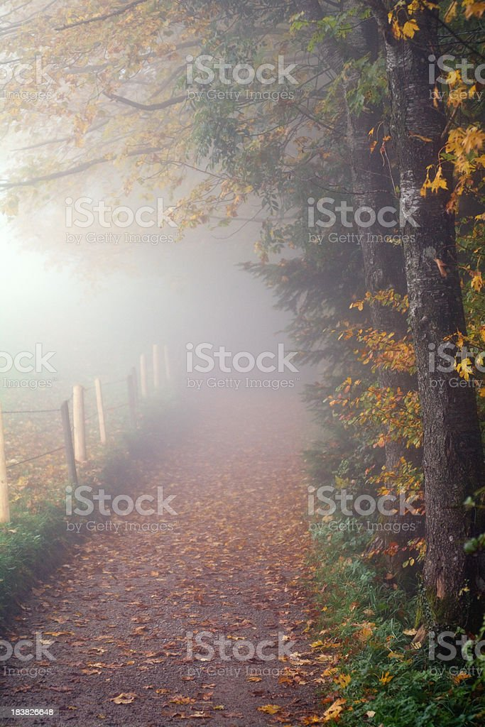 Country Path in Autumn Fog stock photo