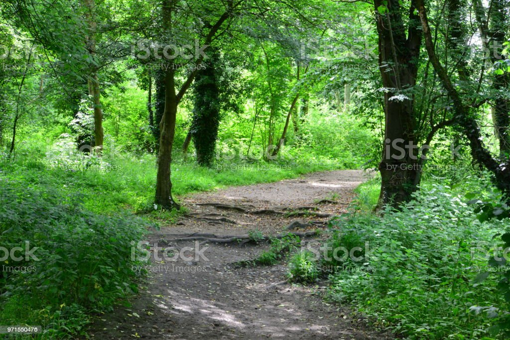 A country path in Dorking, Surrey stock photo