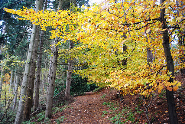 Country path in fall stock photo