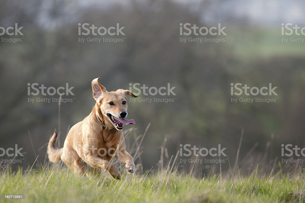 country pursuits stock photo