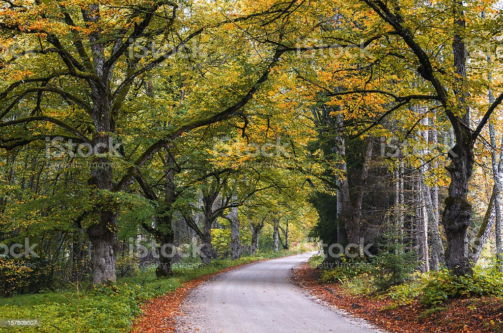 Country road among autumnal trees royalty-free stock photo