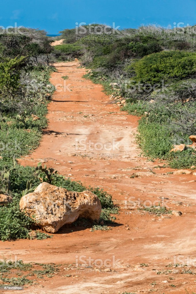 Country road among xerophyte vegetation royalty-free stock photo