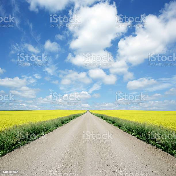 XXXL country road and canola
