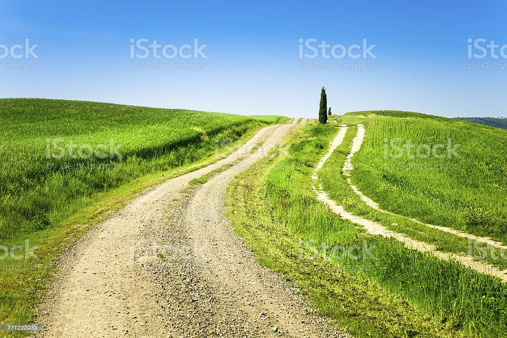 Country Road and Cypress in Tuscany, Val d'Orcia, Italy royalty-free stock photo