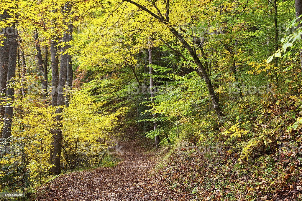 Country Road and Hiking Trail stock photo