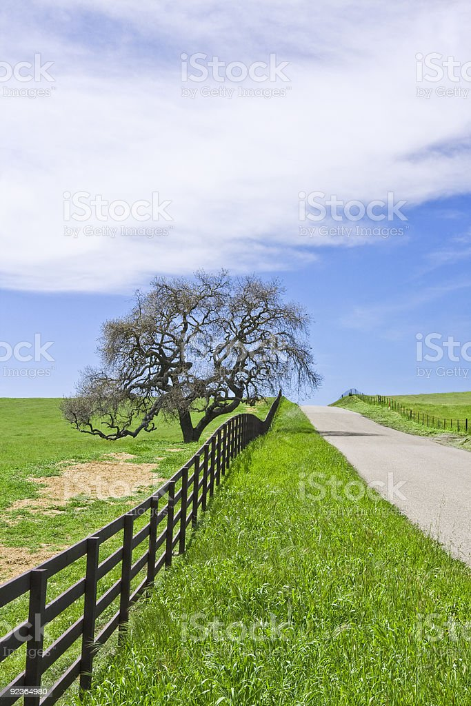 Country Road and Oak royalty-free stock photo