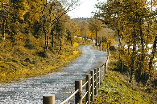 Country Road at Autumn, Kemerburgaz Urban Forest in Istanbul, Turkey