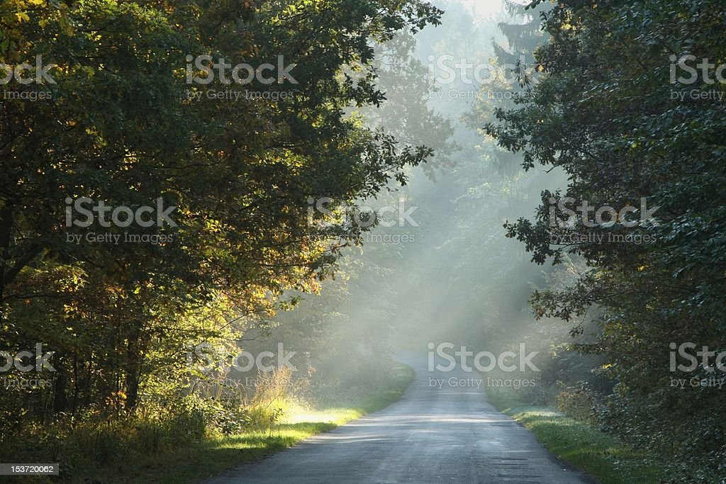 Country road at dawn royalty-free stock photo