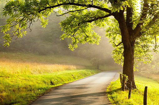 Country Road at Dawn