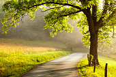 istock Country Road at Dawn 500891249