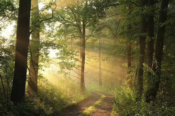 Route de campagne au lever du soleil - Photo