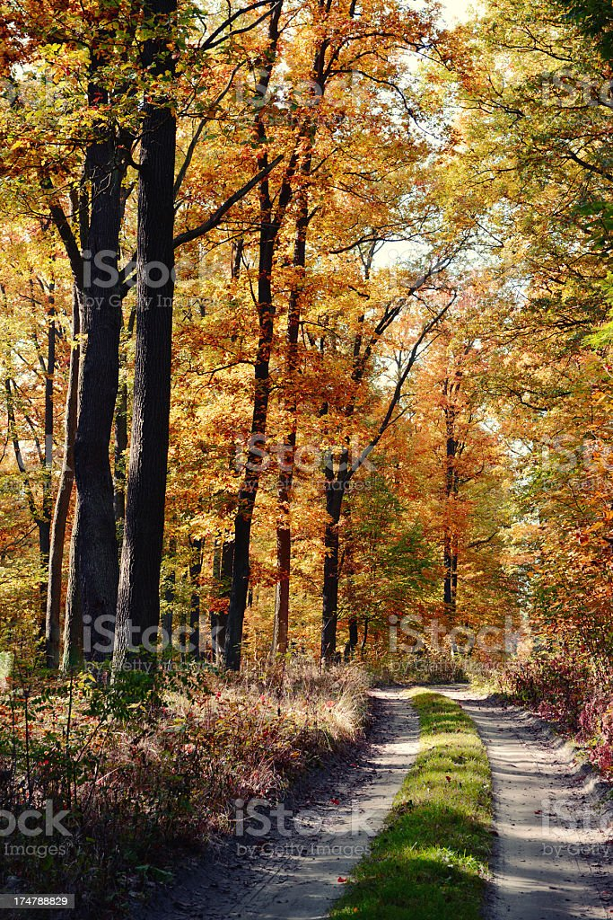 country road Avenue with colorful beech tree in autumn time stock photo