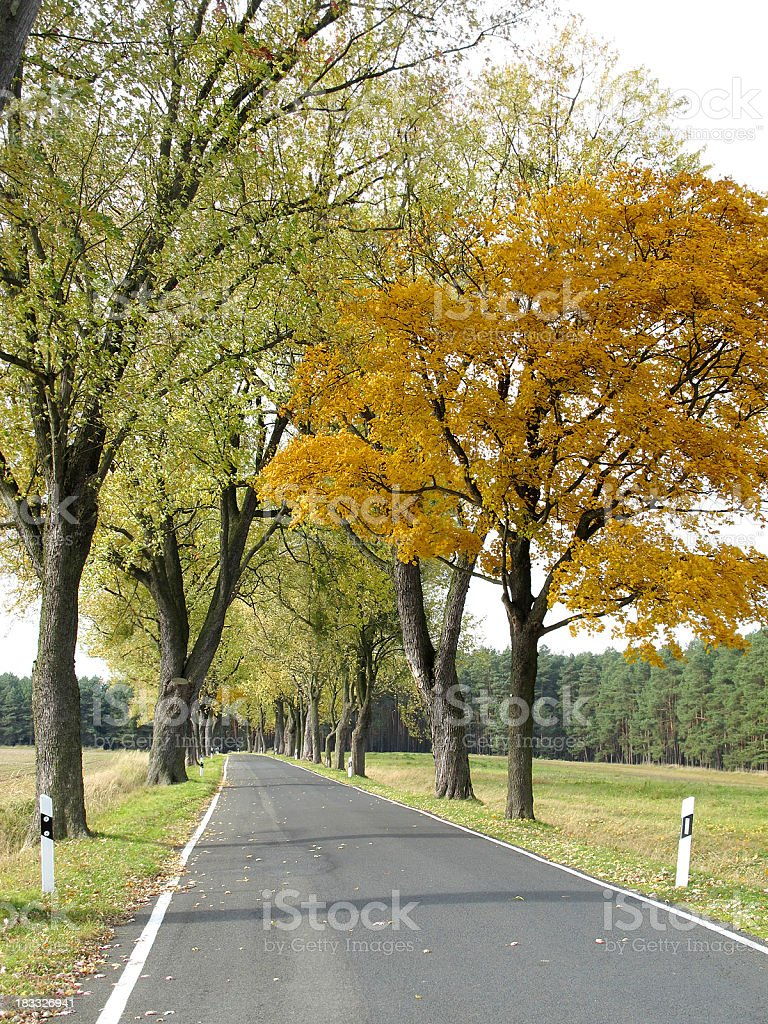 country road Avenue with colorful maple tree in autumn time stock photo
