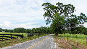 Country road with wooden fence on one side and a five-strand barbed wire fence on the other side with diminishing perspective.