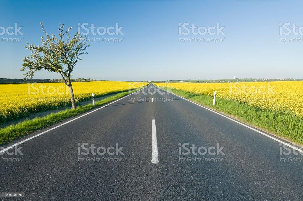 Country road zwischen blühenden canola Felder – Foto
