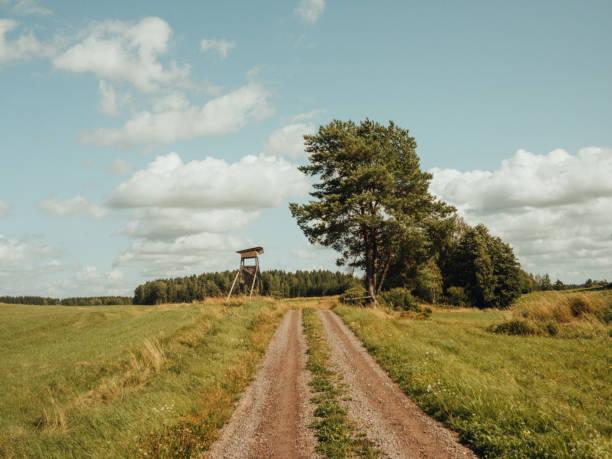 Carretera rural entre campos con torre de caza - foto de stock