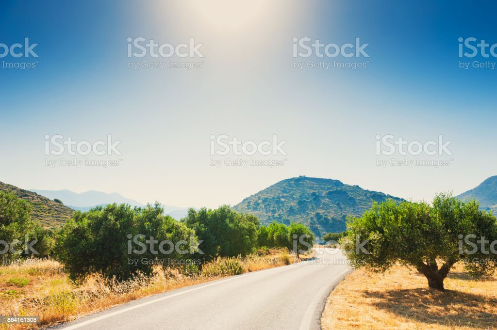 Country road between olive grooves in Crete, Greece. royalty-free stock photo