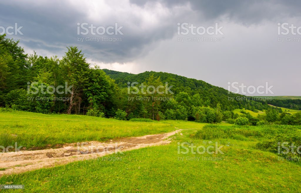 country road down the hill through the forest stock photo