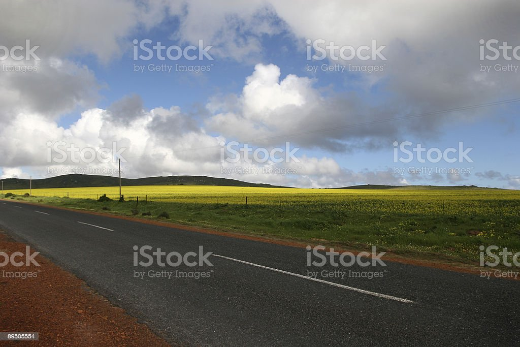 country road / fields of gold royalty-free stock photo