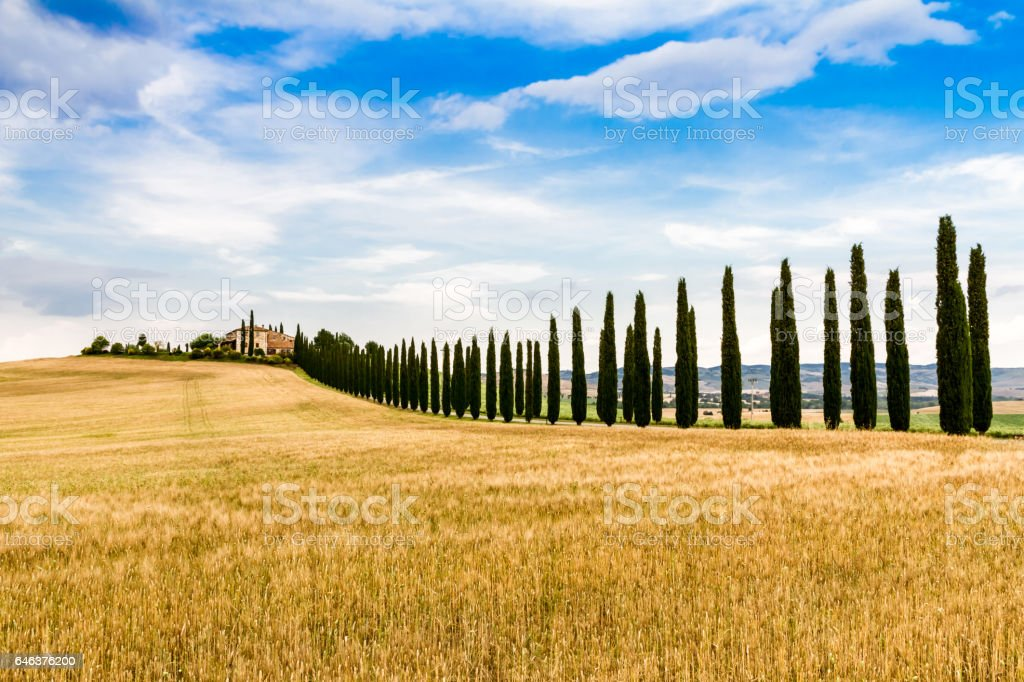 country road flanked with cypresses in Tuscany, Italy stock photo