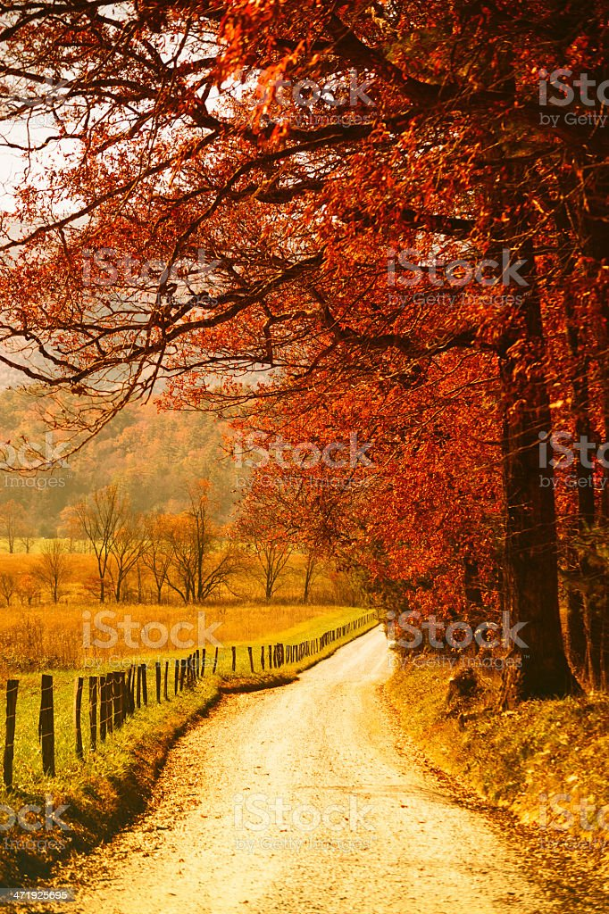 Country road in a forest during Autumn stock photo