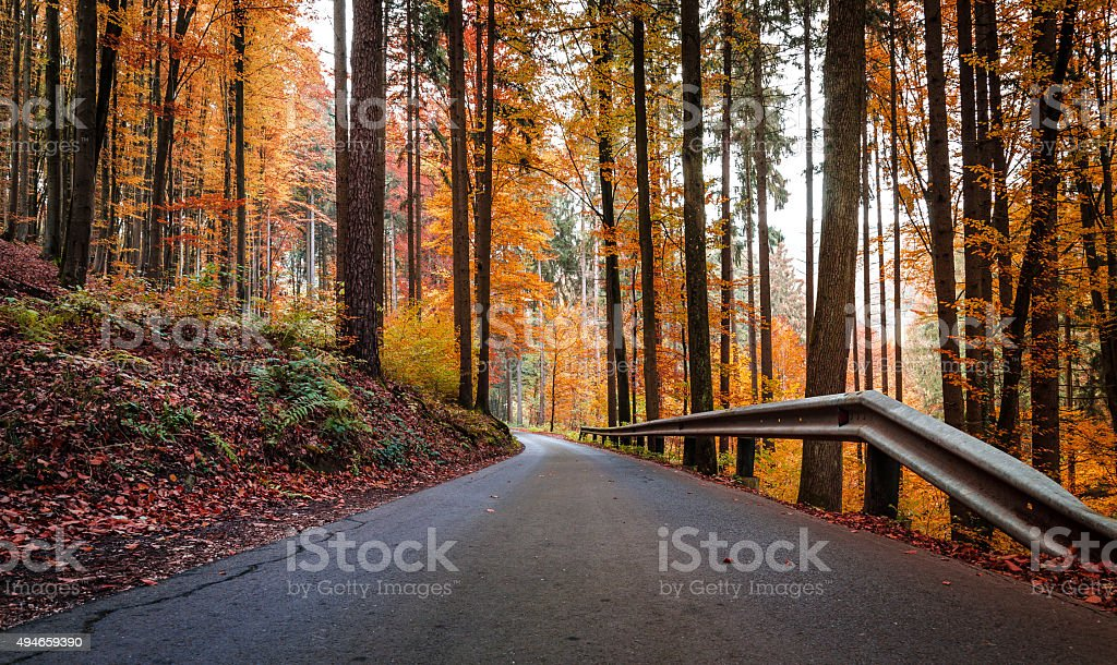 Country road in a forest on a cold autumn morning stock photo