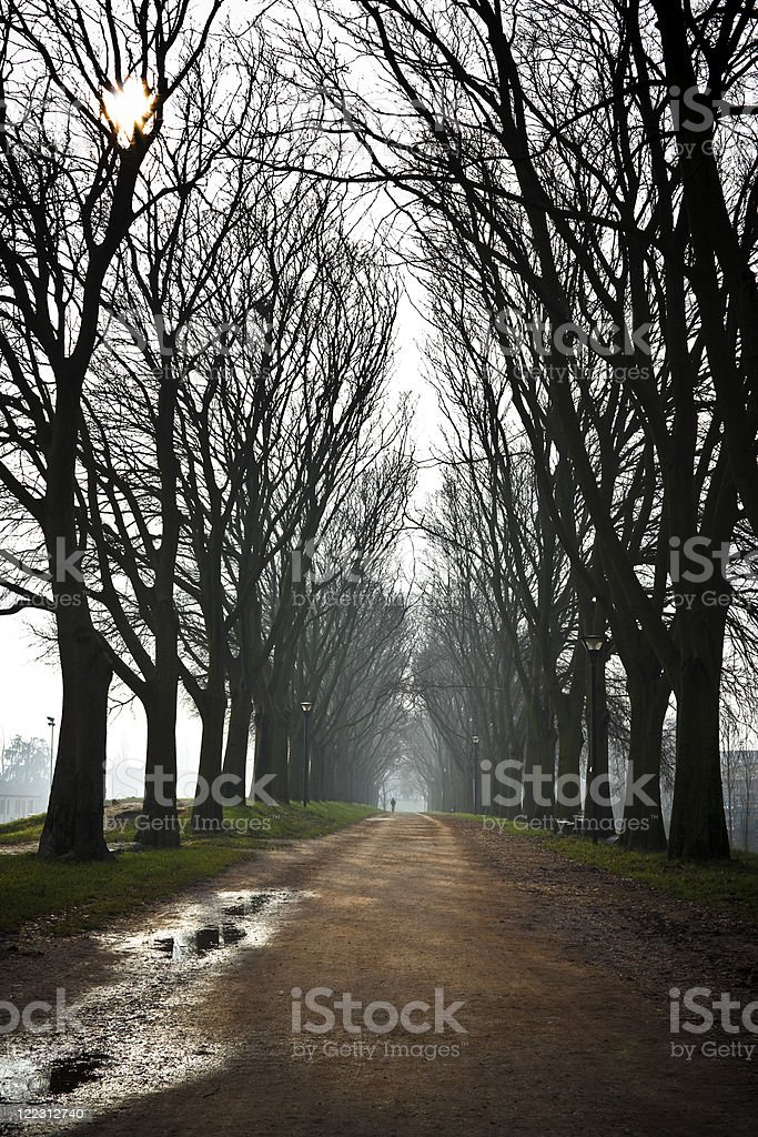 Country road in a misty morning royalty-free stock photo