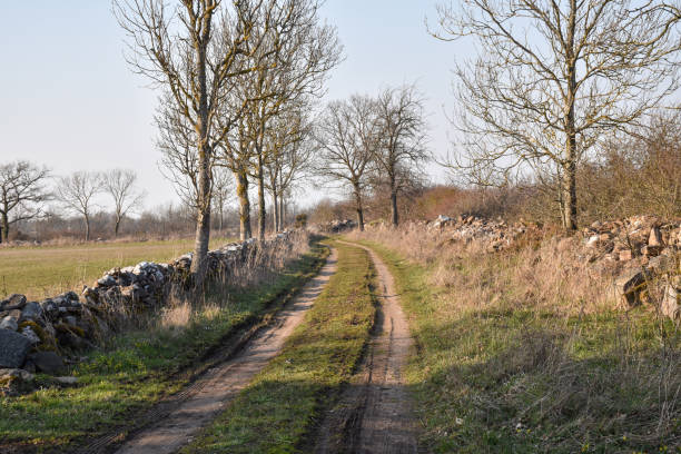 Country road in an old farmland stock photo