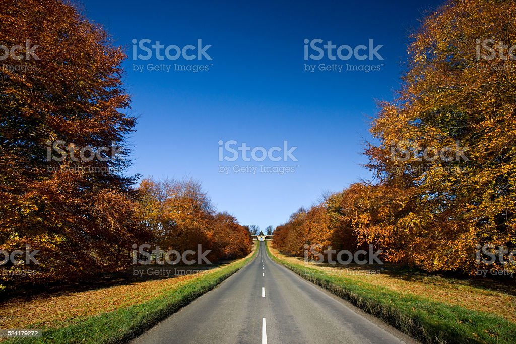 Country road in Autumn stock photo