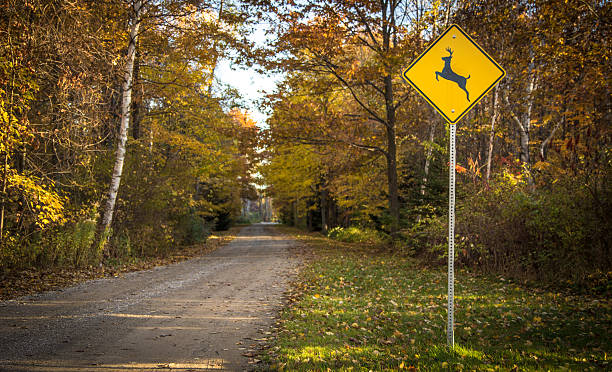 Country Road In Autumn With Deer Crossing Sign stock photo
