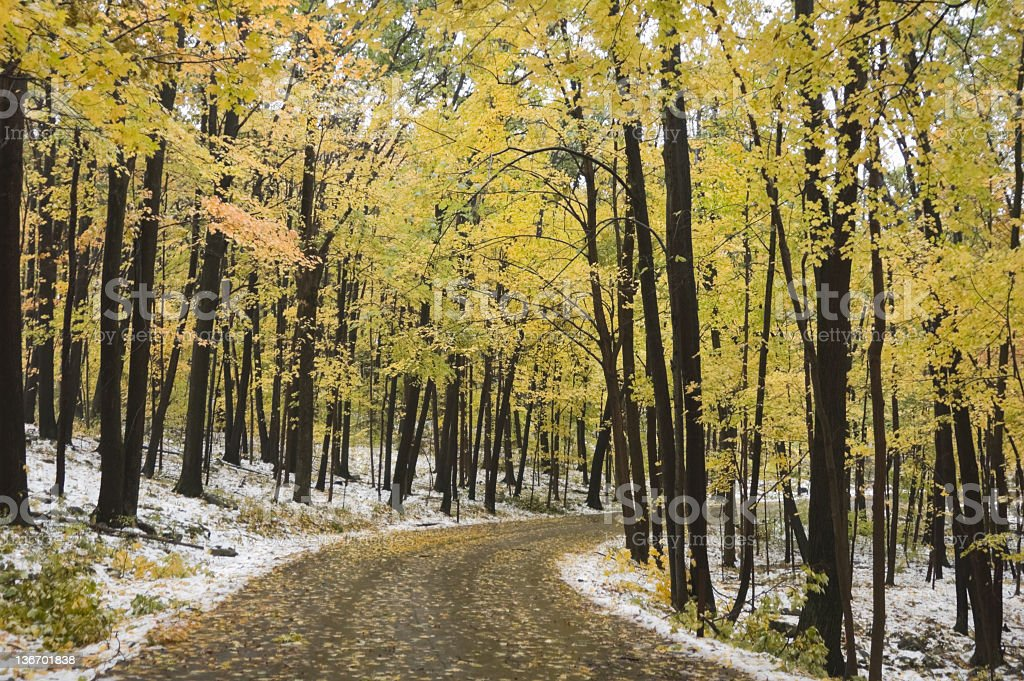 Country Road in Early Snow on Fall Leaves royalty-free stock photo