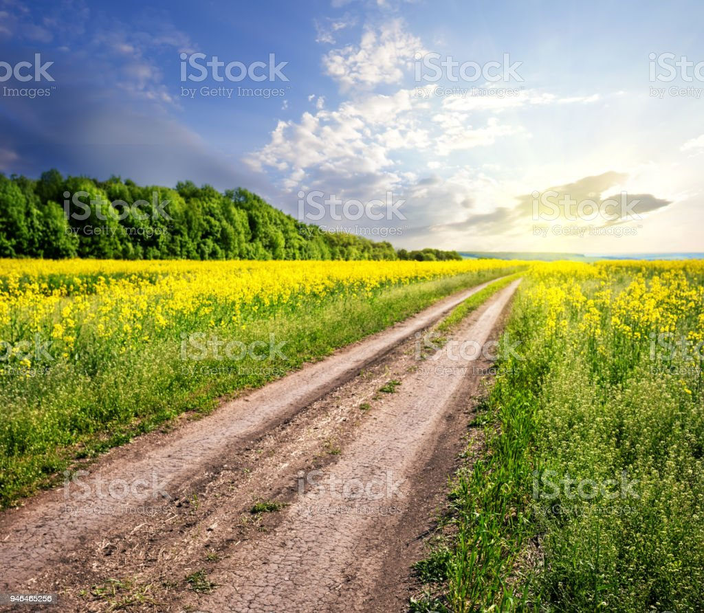 Country Road In Field With Yellow Flowers Stock Photo More