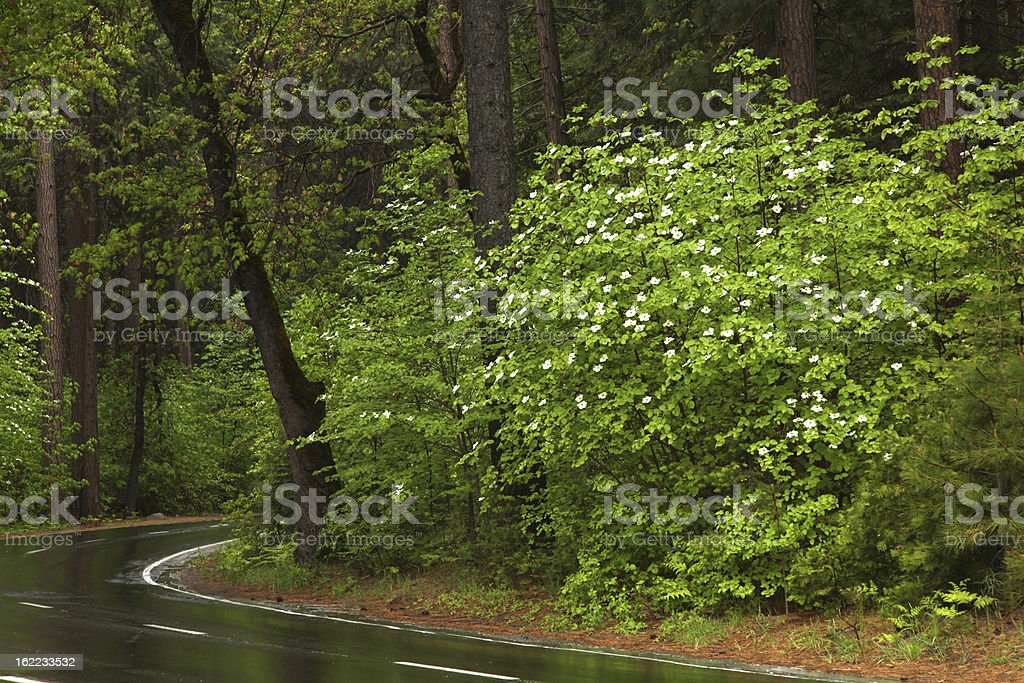 Country Road in Forest stock photo