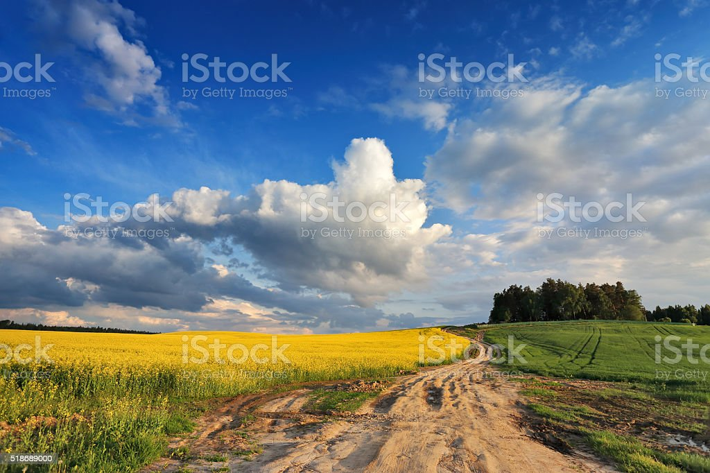 Country road in spring colza fields stock photo